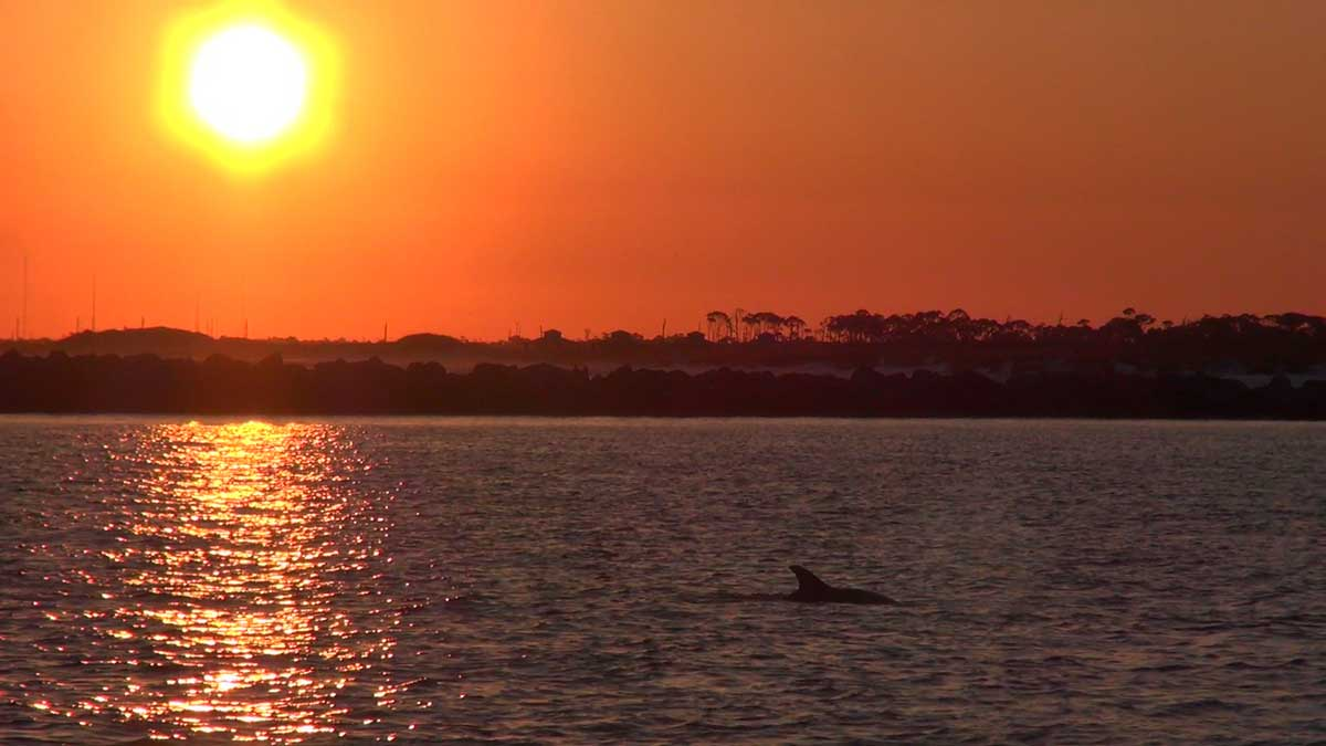 Sunset-Dolphin